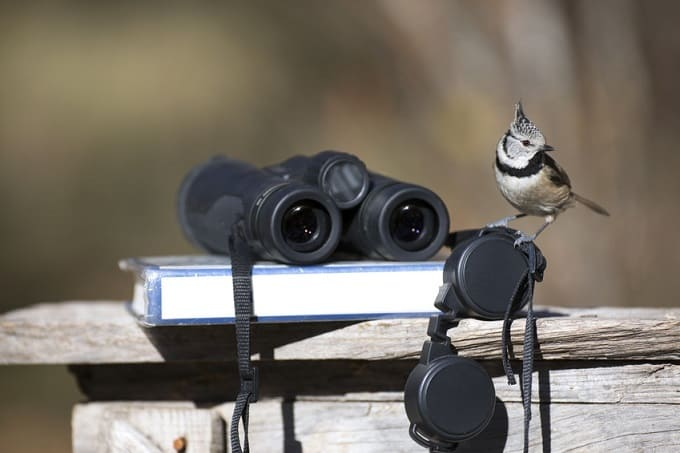 Fernglas Vogelbeobachtung Hero