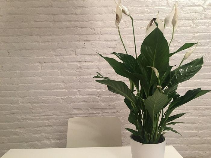 27 Zimmerpflanzen Für Wenig Licht Große Kleine Blühende Und Mehr