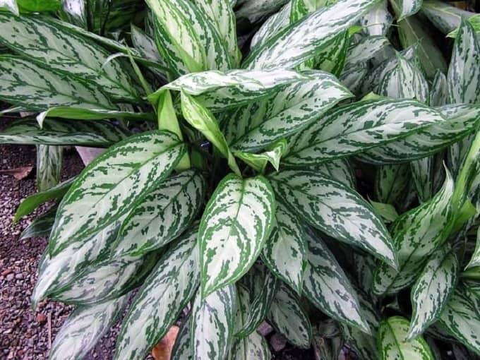27 Zimmerpflanzen für wenig Licht - Große, kleine, blühende und Mehr
