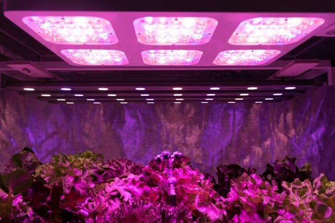 Pflanzenlicht LED Pflanzenlampe Hero